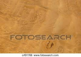 Wood surface, Myrtle Wood (Myrtus communis) full frame Stock Photo |  crf01768 | Fotosearch