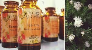 tea tree oil for lice prevention vs