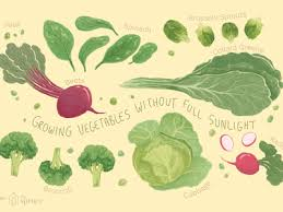 vegetables and salad greens to plant in