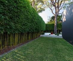Bamboo Hedge Garden Hedges Bamboo Garden Bamboo Hedge