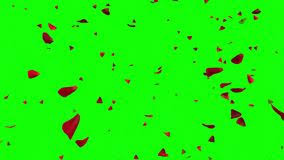 falling rose petals with green screen