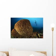 Salvador Dali Sponge With Wall Decal Design 2 Wallmonkeys Com