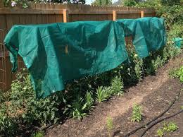 Shade Cloth Over Tomatoes