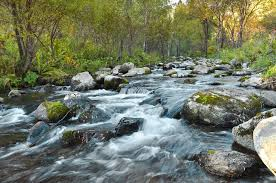 Fast Flowing River Free Stock Photo - Public Domain Pictures