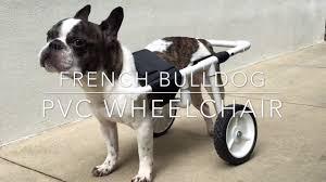 diy french bulldog pvc dog wheelchair