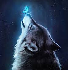 wallpaper wolf blue erfly