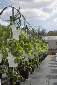 est way to grow hydroponics