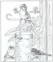 Kleurplaat Natuur Rondom Het Huis Vogels Kleurplaten Vogels