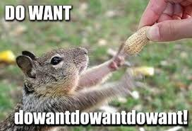 Squirrel Nut Funny Quotes Quotesgram