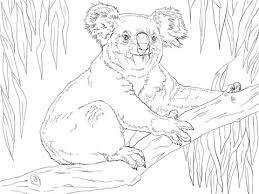 Koala Zit Op Een Tak Kleurplaat Gratis Kleurplaten Printen