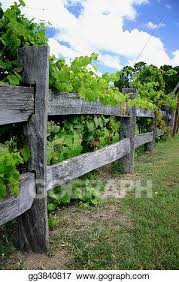 Stock Photography Grape Vines On Fence Stock Image Gg3840817 Gograph