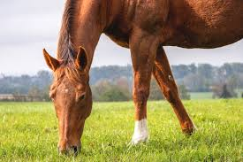 posting horse manure how do i use