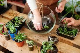 how to make a succulent terrarium 4