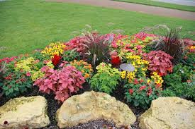 color flower beds annual flower beds