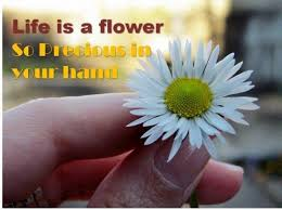 flower quotes about life life is a flower collection of