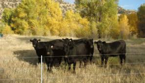 Fast Facts Electric Fence Safety On Pasture