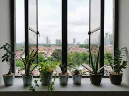 thriving garden in your tiny apartment