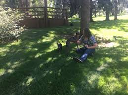 Pet Candids creates memories for families – Greeley Tribune