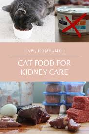 raw homemade kidney care t for cats