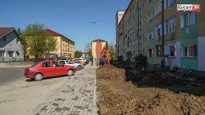 """În vremuri de criză, soluții adecvate""""! Pini și mesteceni de la Brebu Nou, replantați la Reșița"""