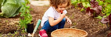 kids vegetable gardens zones