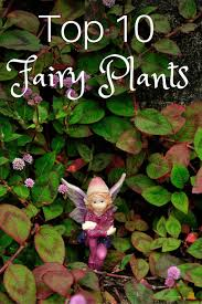 top 10 plants for fairy gardens
