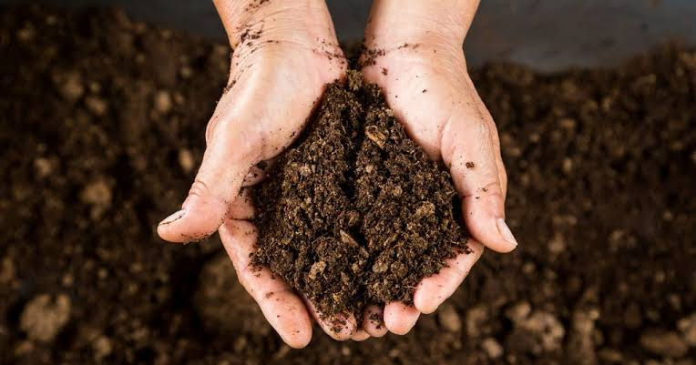 Image result for Get the right soil""