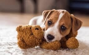 top 500 small dog names adorable cute