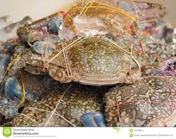 Fresh Crabs On Ice In Seafood Market ...