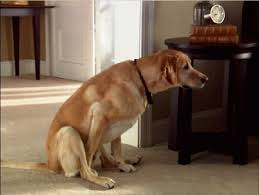 dog smell out of your house and carpet