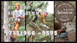 splendora tree service - Cleveland TX | tree trimming, tree ...