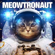 There is really only word that can describe a cat in a spacesuit ...