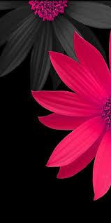 خلفيات شاشة موبايل سامسونج Samsung Galaxy S8 Plus Pink Flowers