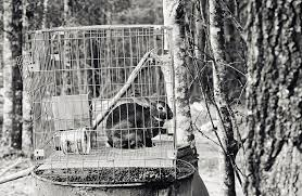 Caged Rabbit Photograph by Floyd Smith
