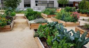 raised beds vs in ground beds urban
