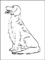 Hondenrassen Gratis Kleurplaten Pagina 21