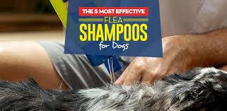 the best flea shoo for dogs in 2020