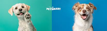 pet services for dogs cats grooming
