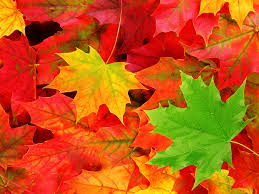 autumn leaf wallpaper on hipwallpaper