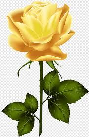 زهرة صفراء التوضيح حديقة الورود وردة صفراء مع الجذعية اللون