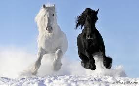 أروع صور وخلفيات حصان بجودة عالية دقة 4k 2020 ساجي زيرو