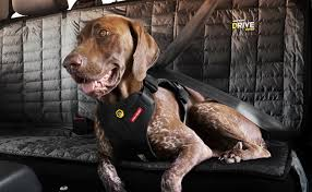 best dog harnesses and dog seat belts