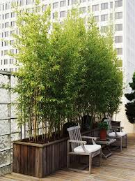 Bamboo Plants In The Garden Better Homes Gardens