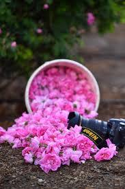 بالصور مصور سعودي ينقل جمال الورد الطائفي للعالم