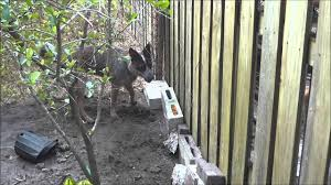 How To Dog Proof A Fence Youtube