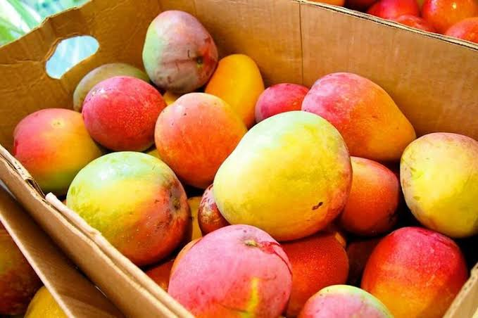 "Resultado de imagen de huertas de mango sinaloa"""