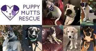 Puppy Mutts Rescue – because all lives ...