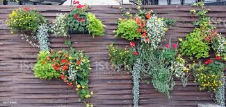 On A Wooden Rustic Fence Hang Pots With Bright Autumn Flowers And Plants Stock Photo Download Image Now Istock