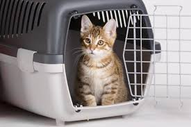 pet odor removal easiest ways to get