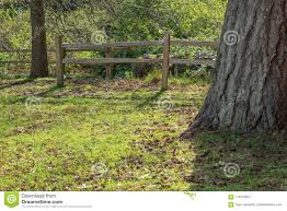 Post Fence Behind Tree Stock Image Image Of Green Forest 116419921